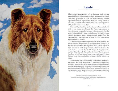 Dogs lassie