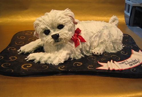 Astonishing Custom Dog Cakes Cake Disasters The Pet Blog Lady Personalised Birthday Cards Arneslily Jamesorg