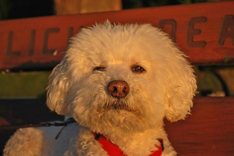 Charlie at sunsetc modified