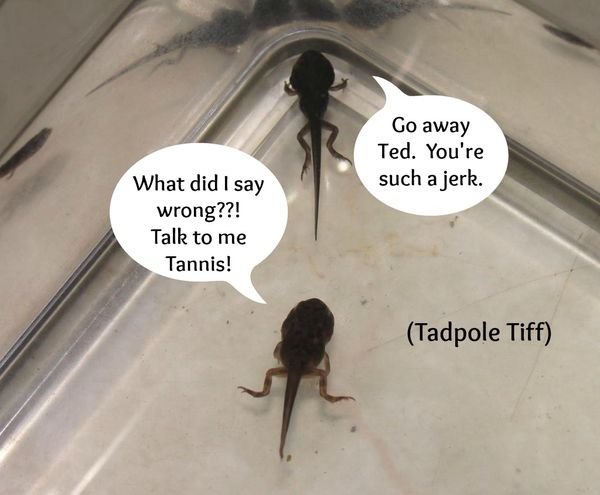 Tadpole Bowl