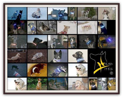 Headlites_collage