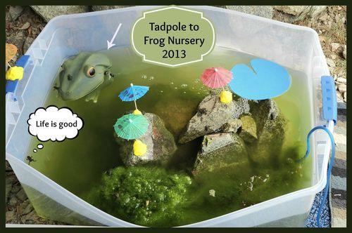 Frognursery - Copy