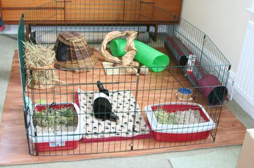 Indoor-rabbit