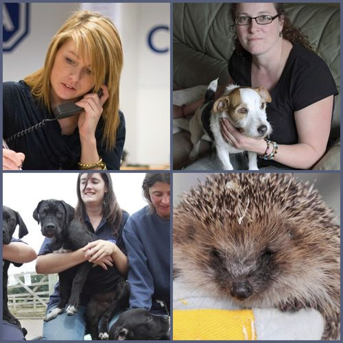 Collage for RSPCA