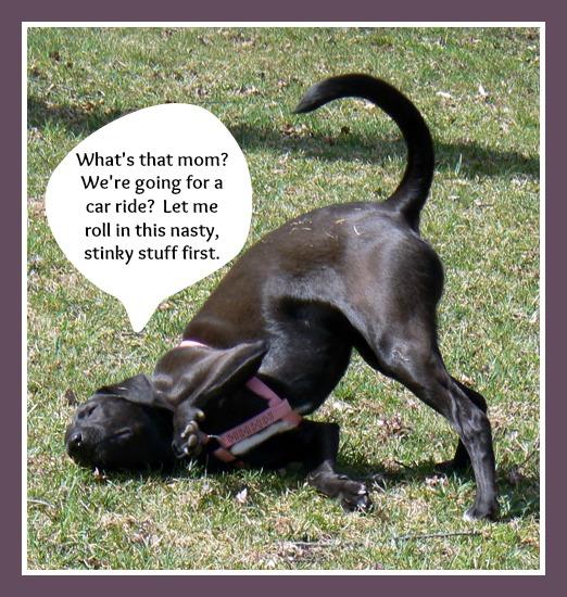 Dog Rolling In Cat Poop