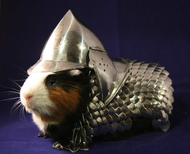 Guinea-pig-armour-ebay-odd