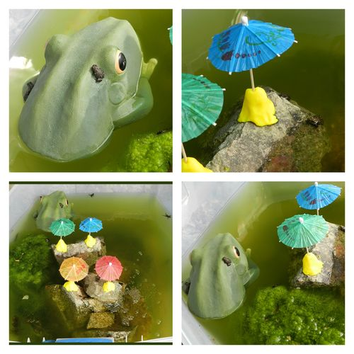 PicMonkey Collage Frogs 2013