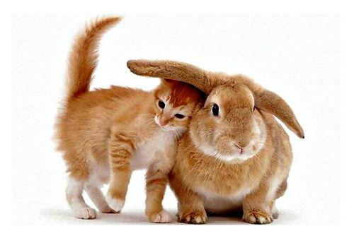 Rabbit-design