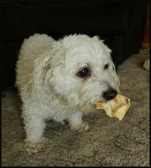 Oscar with chewie