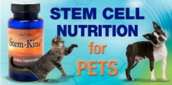 Stem cell banner for pet blog lady