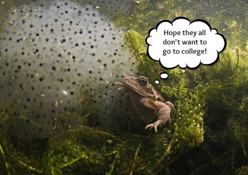 3rd_coldwater_FrogEggs_Derek_Haslam