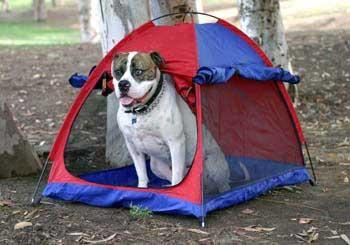 Camping-Dog