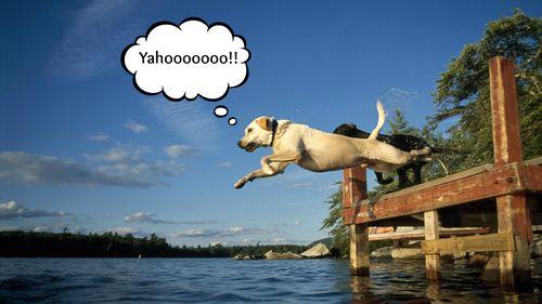 Dog at lake