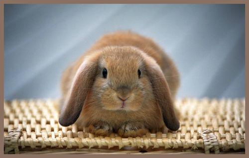 Rabbit-1115-9GPCGH22Y4-1440x900