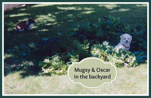 Oscar and mugsy 001