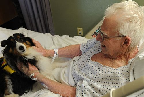 Langley_therapy_dog