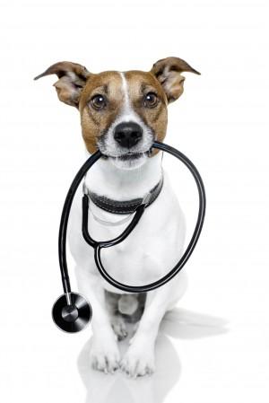 Can Dogs Take Naproxen