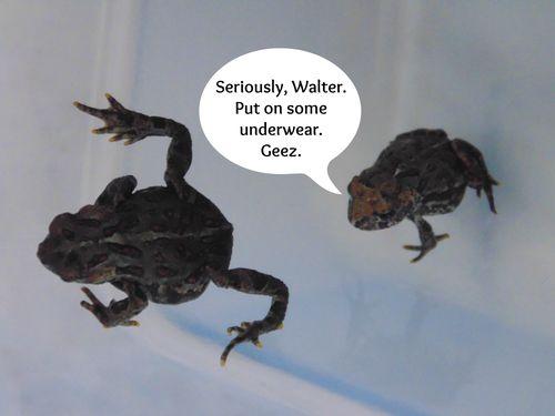 Walter needs underwear
