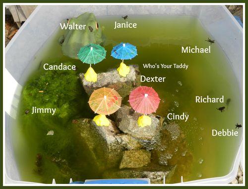 Frognames