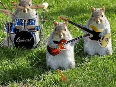 Squirrel-band