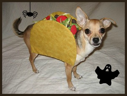 diy halloween costumes for your pup - How To Make A Dog Halloween Costume