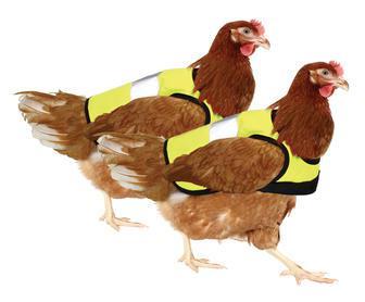 Chicken_hi_vis_jacket_yellow_twin