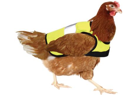 Chicken-vest