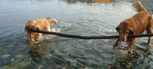 Xena and Dax at the Ken Forde Park