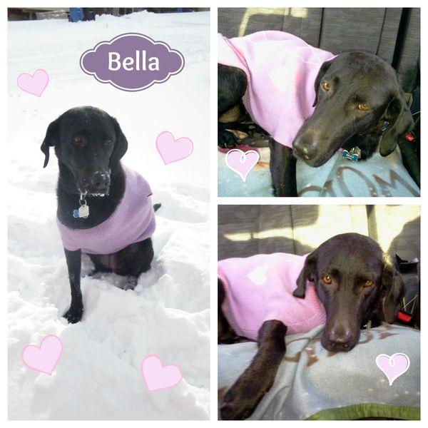 beautiful bella a 3 legged rescue dog full of love