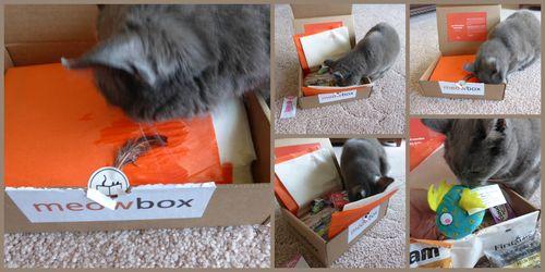 Meowboxcollage