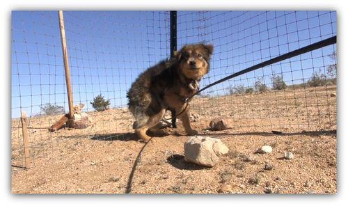 Desert dogs2