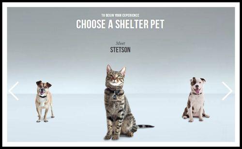 Choose_a_shelter_pet_001