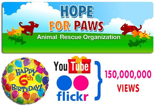Hope for paws birthday