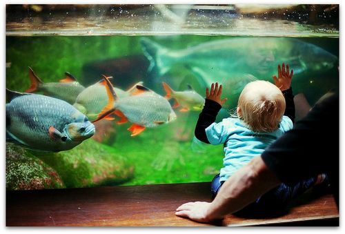 Calming effects of aquariums