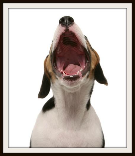 Bad-Breathe-Canine-ATV2