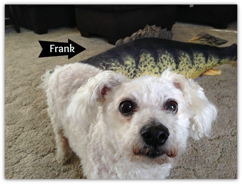 Oscar and frank