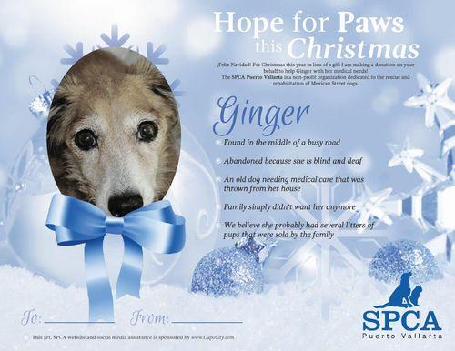 Certificado-spca-Ginger