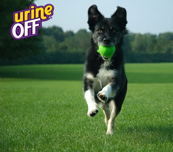 Substitutes for Rice in a Dogs Diet   Dog Care - The