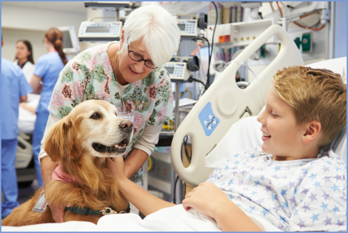 Bigstock-Therapy-Dog-Visiting-Young-Mal-55984862border