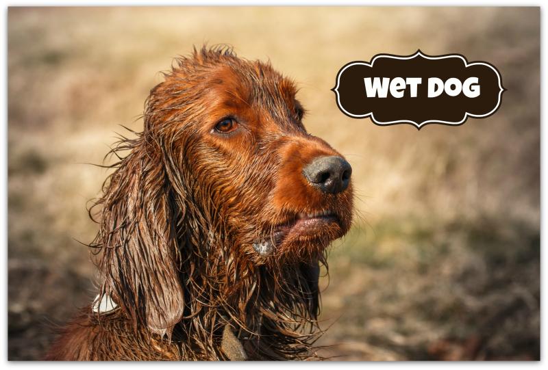 Petcraft wet dog
