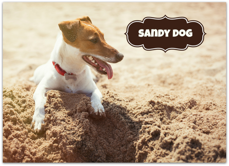 Petcraft sandy dog