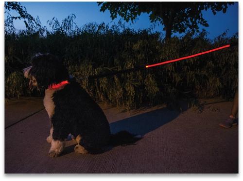 GLOPUP Red leash collar (1)