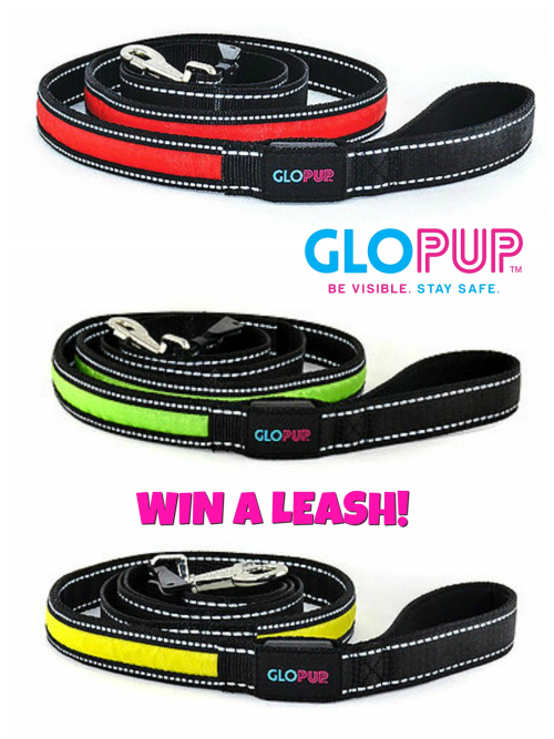 Glopup collage WIN NOTE