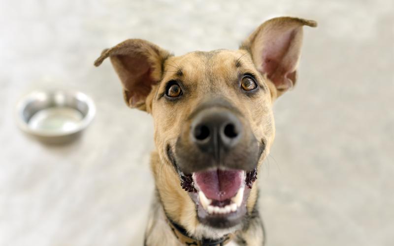 Bigstock-Happy-Dog-Bowl-97654535