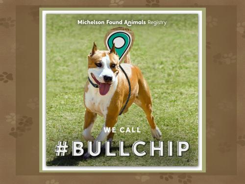 Bullchip header
