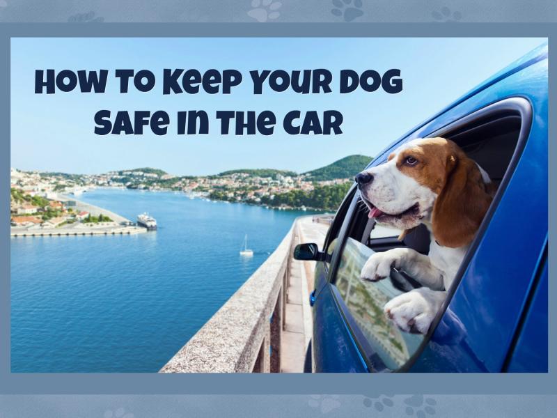 Dog safe in car
