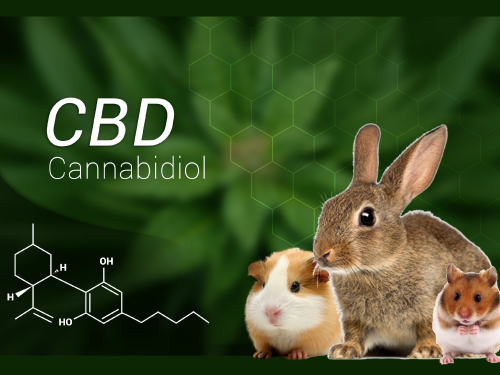 What is Cannabidiol (CBD) and How Does it Help Your Pet
