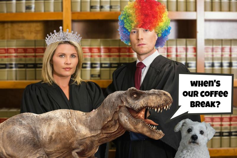 Pet blog lady law office