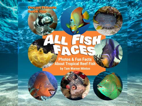 Fish faces header