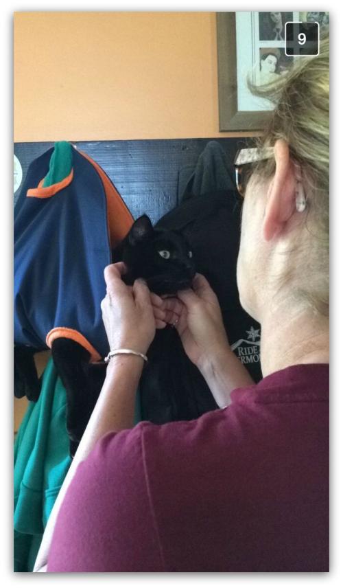 Photo 3 - cat